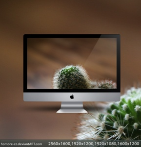 Cactus by hombre cz Amazing brackgrounds of hombre cz alias Pavel