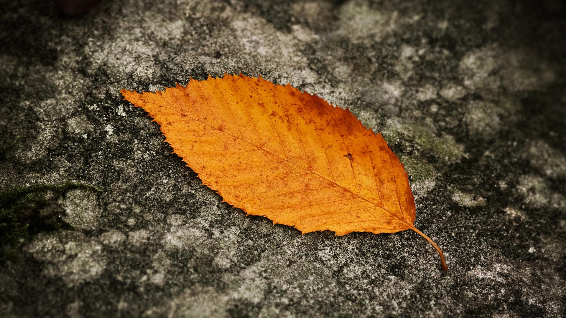 Fallen Leaf 1920x1080 HDTV Amazing Landscape Photographies of Sven Müller